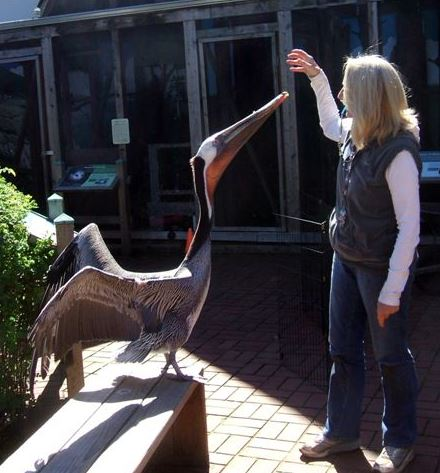 Mary with Baja the pelican. Photo by Don Koss