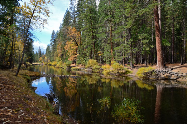 Fall on the Merced River. Photo by Laura Milholland