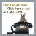 Found an animal? Click here!